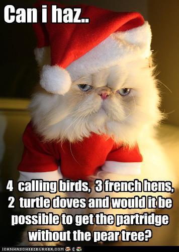 cat_wants
