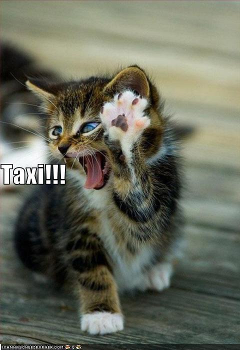 funny-pictures-cat-calls-a-taxi