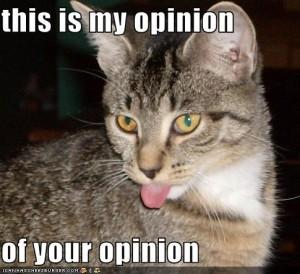 funny-pictures-cat-hates-your-opinion