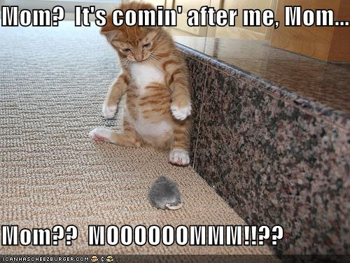 funny-pictures-kitten-toy-mouse