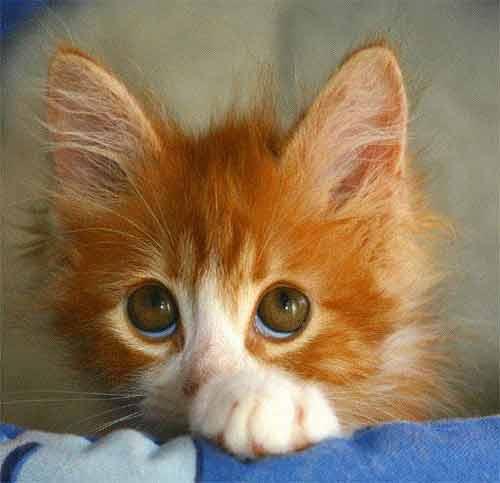 orange-kittens-6
