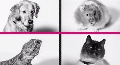 Pets Unleashed t-mobile april fool
