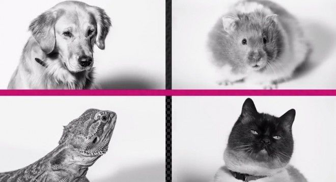 Pets Unleashed t-mobile april fool